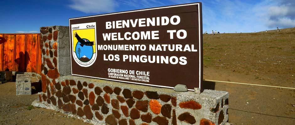 pinguinos-de-magallanes