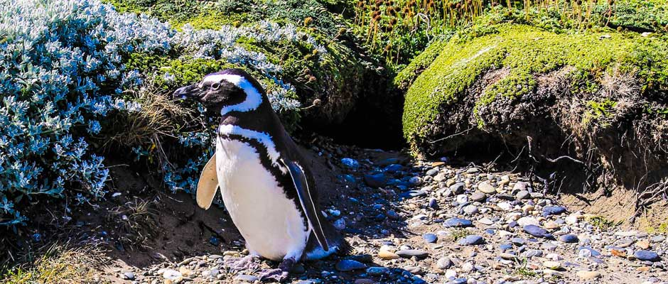tour-pinguineras-punta-arenas
